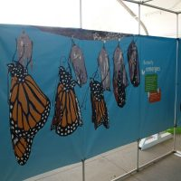 Amazing Butterflies MAZE Exhibit