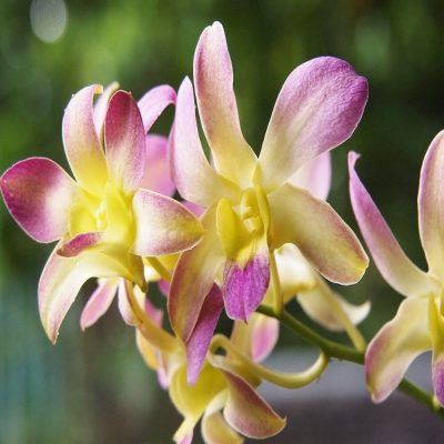 Orchid Greenhouse Tour