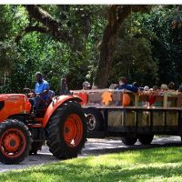 Harvest Festival Theme Weekends at Flamingo Gardens