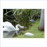Birding Class – Shore Birds Made Easier