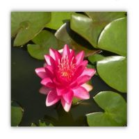 Water Lily Origami. Families Welcome!