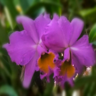 Orchid Care – Repotting & Mounting