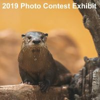 2019 Photo Contest Call for Artist