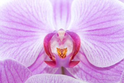 38th International Orchid and Bromeliad Show