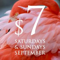 $7 Saturdays and Sundays in September