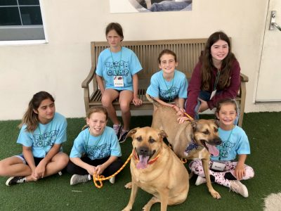 Humane Society of Broward County Pet Play Date Camp