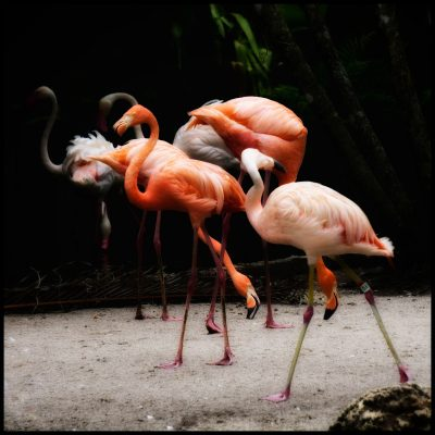 Flamingo Gardens Annual Photo Contest Call for Artists