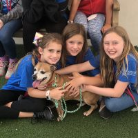 Humane Society of Broward County Pet Play Date Camps