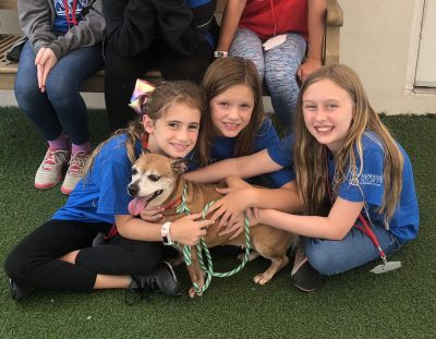 Humane Society of Broward County Pet Play Date Cam...