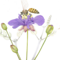 Pollinators Exhibition - Virtual Event