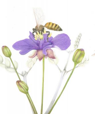 Pollinators Exhibition - Virtual Event