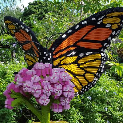 Back 2 School Butterfly Weekend