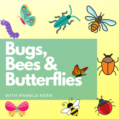 Bugs, Bees and Butterflies
