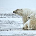 """The Arctic: Our Last Great Wilderness Weekends"""" on Saturday, June 12 and 19"""