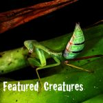 Featured Creatures at Flamingo Gardens
