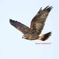 Sunderland Wildlife Photography by Kevan and Linda Sunderland Gallery Six Exhibit