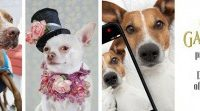 Dog Days of Summer: Fashion Hounds