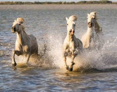 The White Horses and the Sea